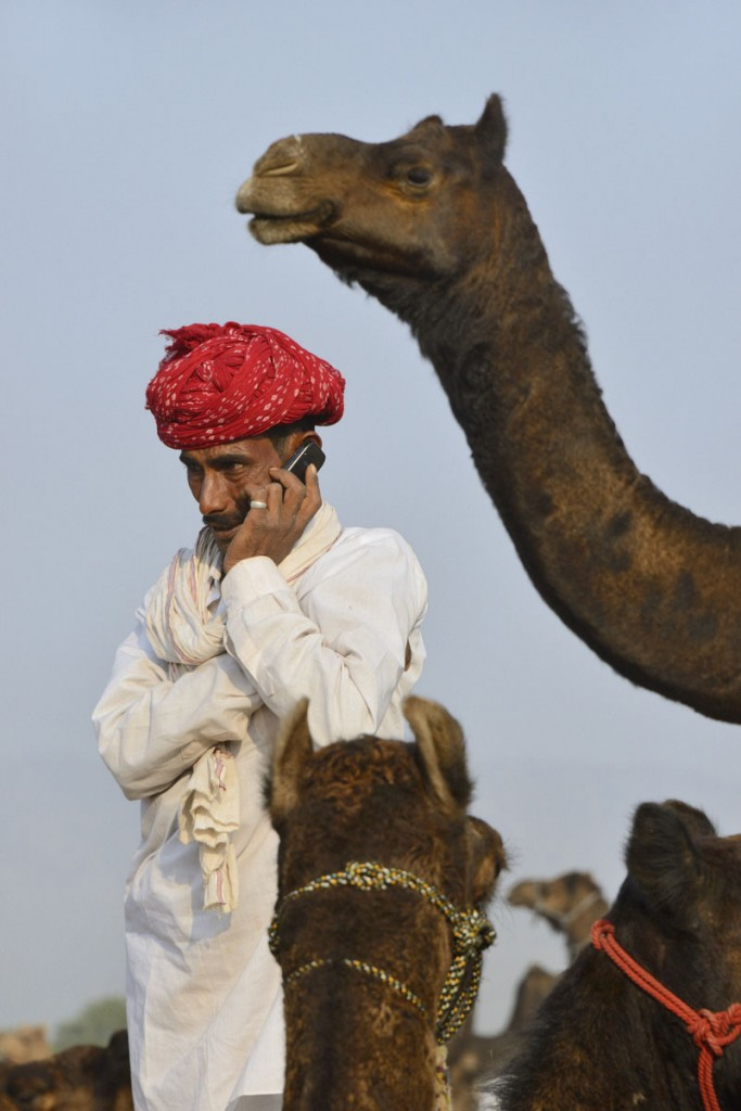 India, Rajasthan, Pushkar camel fair